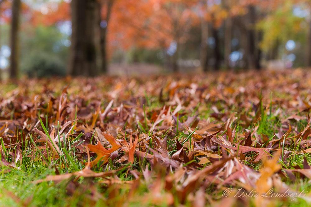 Aussie-autumn
